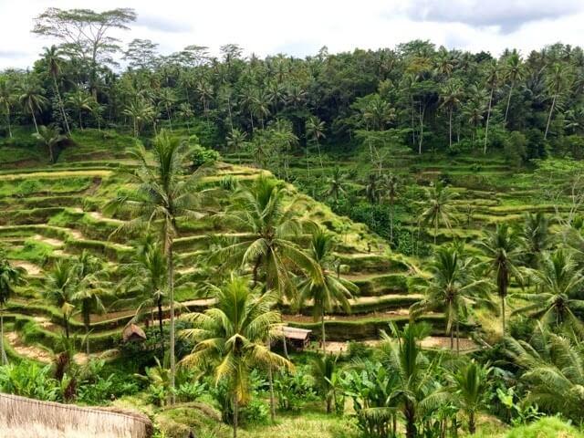 oferta Bali